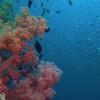 THE LIVING OCEAN - DVD-365