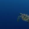 THE LIVING OCEAN - DVD-367