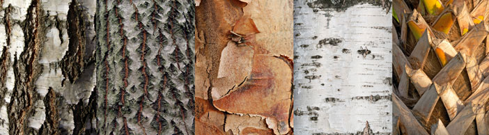 Tree bark - tactile stimulation for Alzheimer's disease