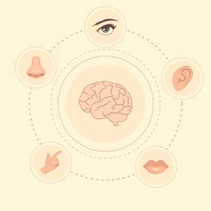 Alzheimer's affects perception - sensory stimulation is brain stimulation