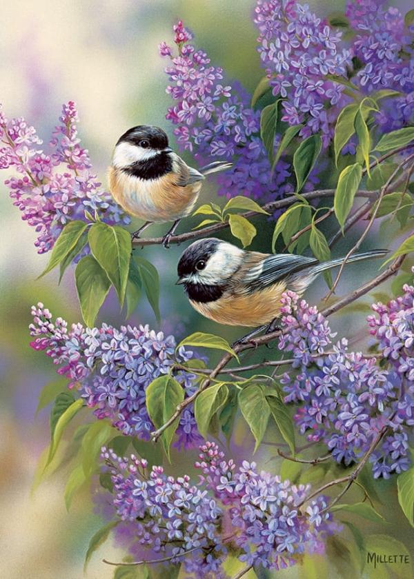 Chickadee Duo