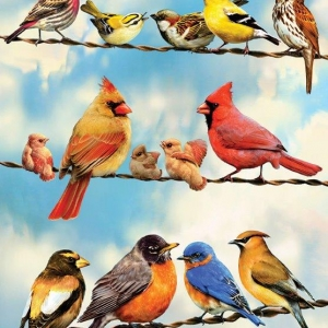 simple puzzle with a variety of birds