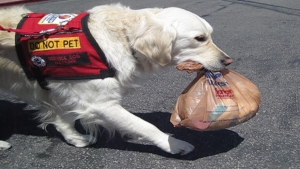 Alzheimer's service animals are trained to ensure safety and lend a helping hand when needed.