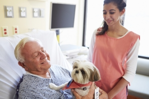 Alzheimer's service animals and therapy animals positively affect quality of life for people with dementia.