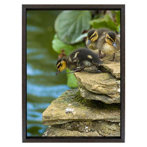 Audio Art - Sound Recollection | Ducks