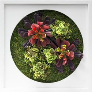 Wall Garden | Bring a little nature into your care community.