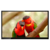Tropical Birds - a relaxing video for alternative entertainment for Alzheimer's and dementia